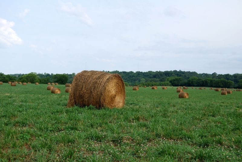 Haybales - the Holston unit grows its own cattle feed