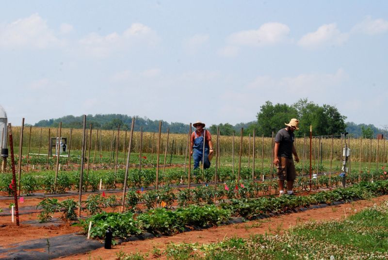 Student workers on the Organic Crops Unit